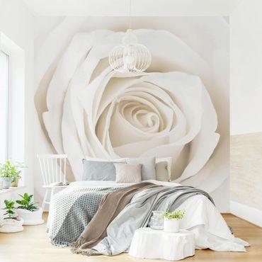 Carta da parati - Pretty White Rose