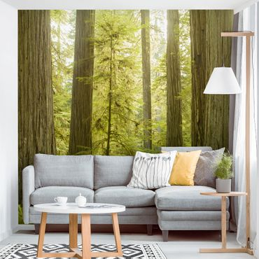 Carta da parati - Redwood State Park Forest View