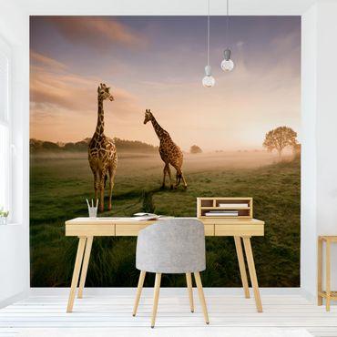 Carta da parati - Surreal Giraffes