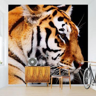 Carta da parati - Tiger Beauty