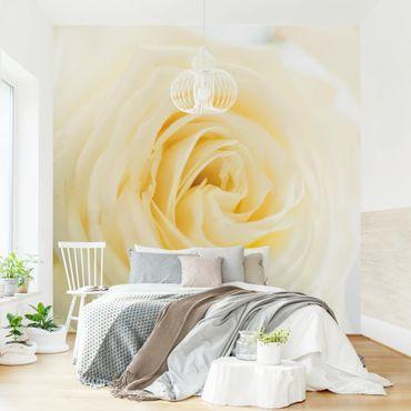 Carta da parati - White Rose