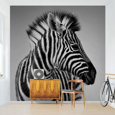 Carta da parati - Zebra Baby Portrait II
