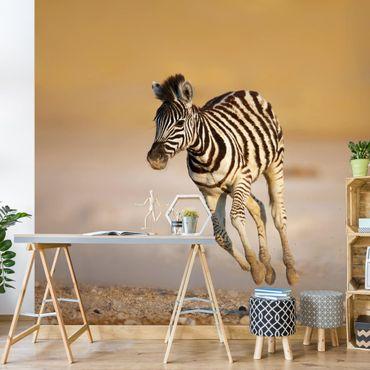 Carta da parati - Zebra foal