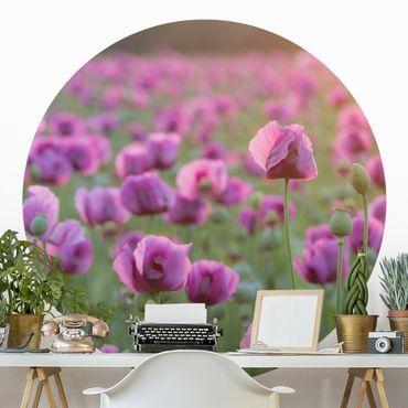 Carta da parati rotonda autoadesiva - Viola fiore di campo papavero in primavera