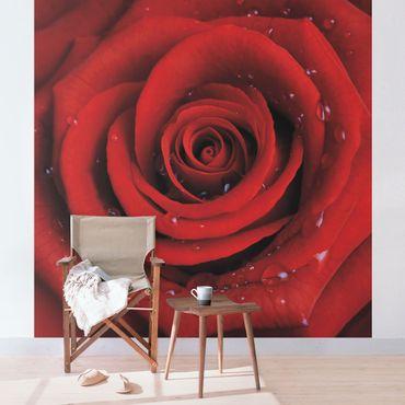 Carta da parati - Red rose with water drops