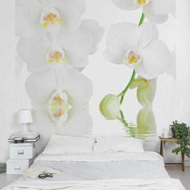 Carta da parati - Wellness orchid