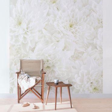 Carta da parati - Dahlias sea of flowers white
