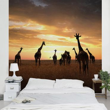 Carta da parati - Famiglia Giraffa
