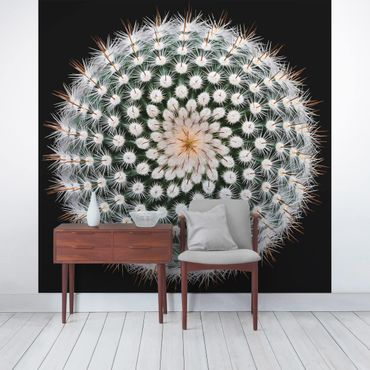Carta da parati - Fiore di Cactus