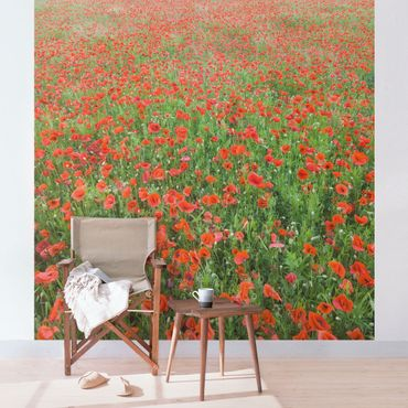 Carta da parati - Field of Poppies