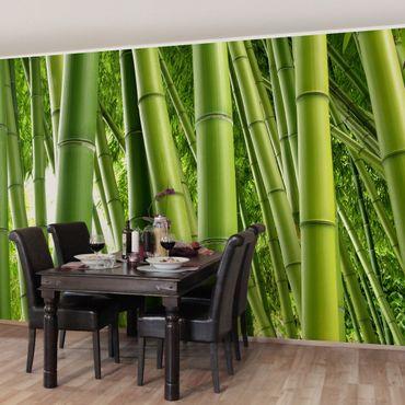 Carta da parati - Bamboo Trees