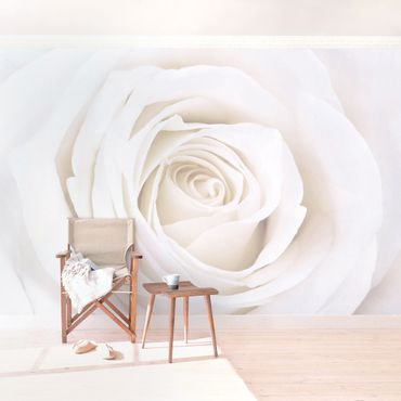 Carta da parati - Pretty White Rose