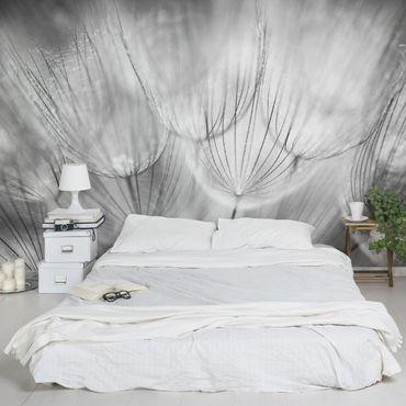 Carta da parati - Dandelions macro shot in black and white