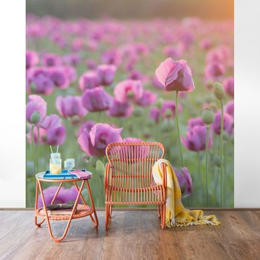 Carta da parati - Violet poppy flowers meadow in spring