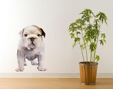 Adesivo murale - bulldog cucciolo Attento