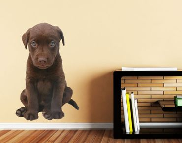 Adesivo murale - scuro Labrador