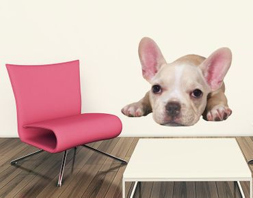 Adesivo murale - bulldog cucciolo stanco