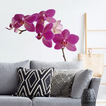 Adesivo murale fiori - no.SB58 Orchidea