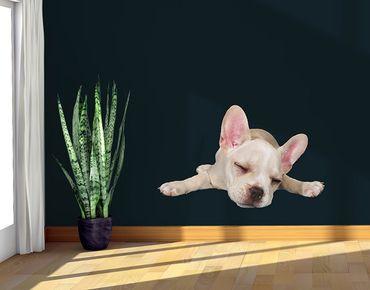 Adesivo murale - Sleeping Bulldog francese