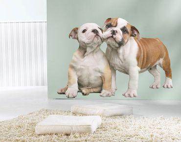 Adesivo murale - bulldog cucciolo Schmusende