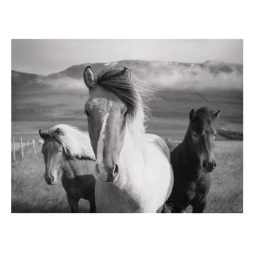 Stampa su tela - Cavalli selvaggi in bianco e nero - Verticale 4:3