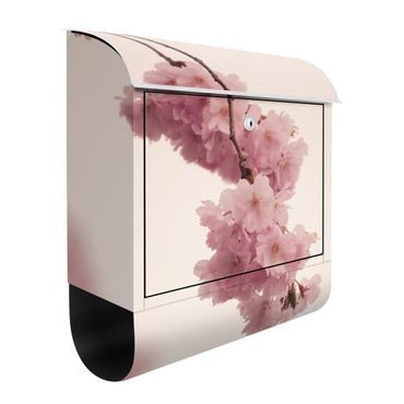 Cassetta postale - Fiori primaverili delicati rosati con effetto Bokeh