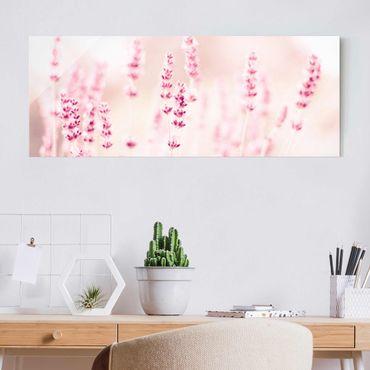 Quadro in vetro - Lavanda delicata rosata