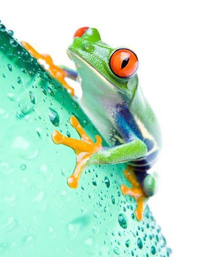 Decorazione per finestre Frog