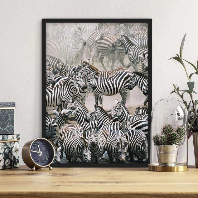 Poster con cornice - Zebra Herd - Verticale 4:3