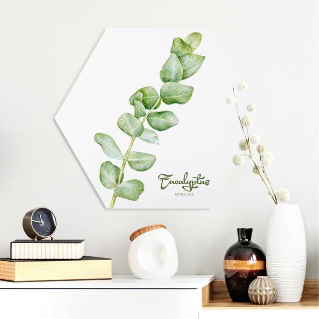 Esagono in forex - Acquerello Botanica Eucalyptus