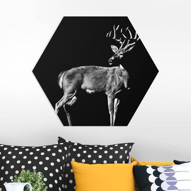 Esagono in forex - Deer In The Dark