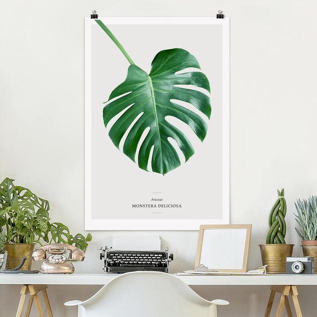 Poster - Foglia tropicale Monstera - Verticale 3:2