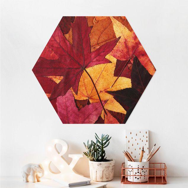 Esagono in Alu-dibond - foglie colorate