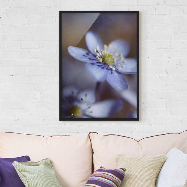 Poster con cornice - Anemones In Blue - Verticale 4:3