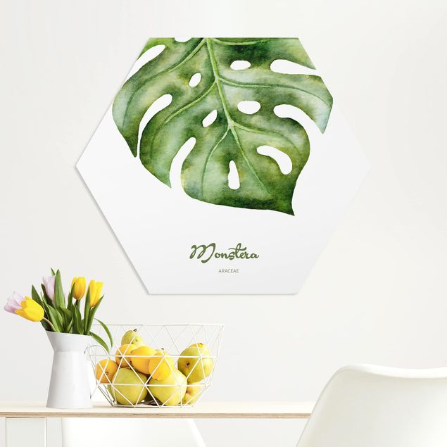 Esagono in forex - Acquerello Botanica Monstera