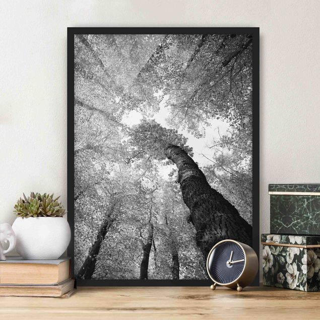 Poster con cornice - Trees Of Life Ii - Verticale 4:3