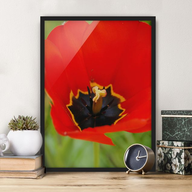 Poster con cornice - Amazing Red Tulips - Verticale 4:3