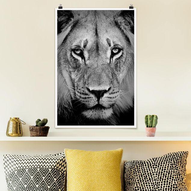 Poster - No.273 vecchio leone - Verticale 3:2