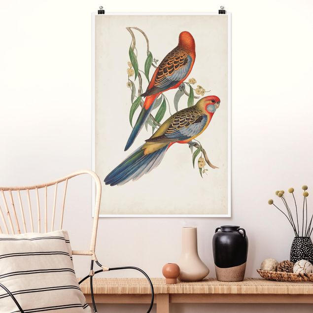 Poster - Tropical Parrot II - Verticale 3:2