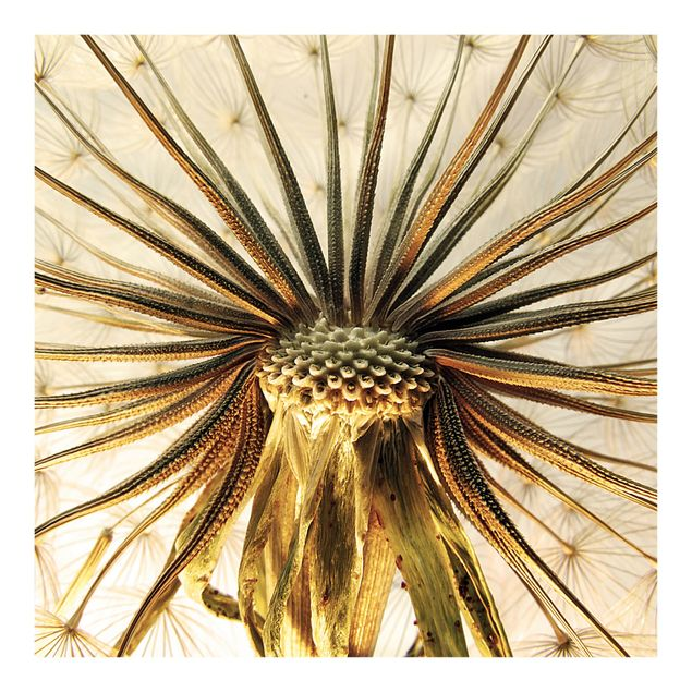 Carta da parati - Dandelion Close-up