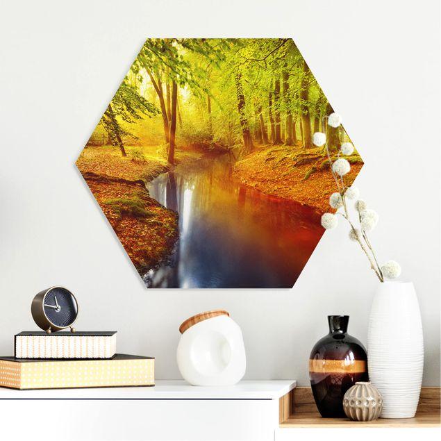 Esagono in forex - Autumn Forest