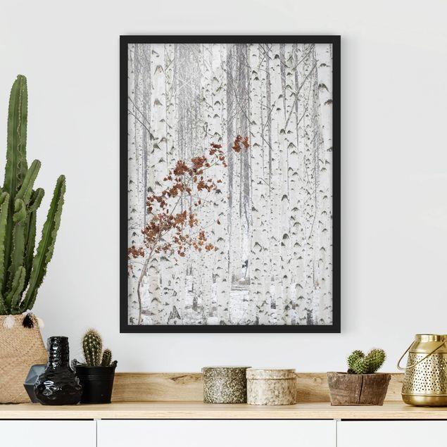 Poster con cornice - Birch Trees In Autumn - Verticale 4:3