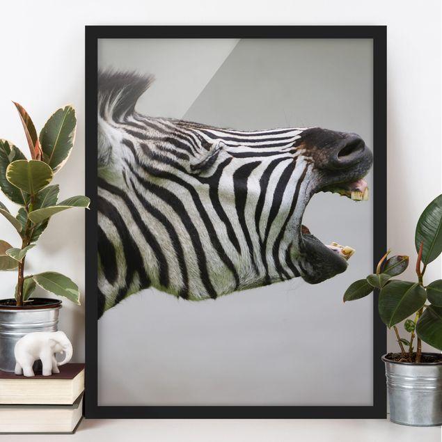 Poster con cornice - Rawling Zebra - Verticale 4:3