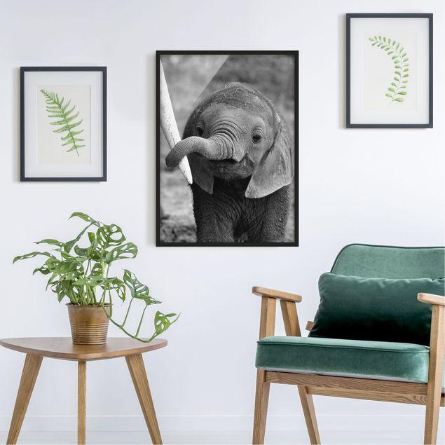 Poster con cornice - Baby Elephant - Verticale 4:3