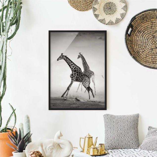 Poster con cornice - Giraffe Hunting - Verticale 4:3