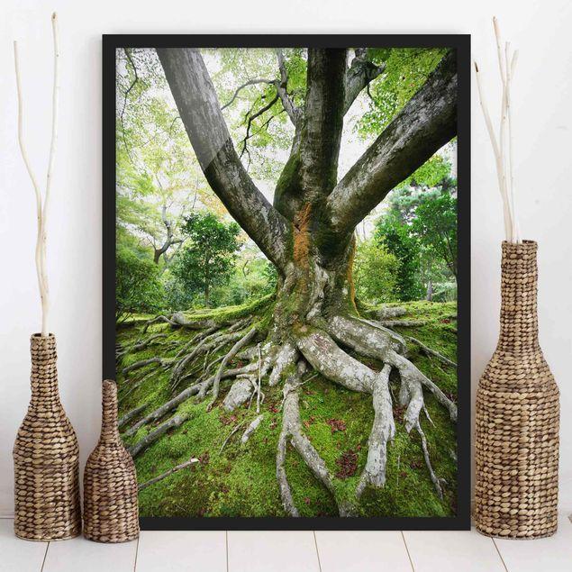 Poster con cornice - Old Tree - Verticale 4:3