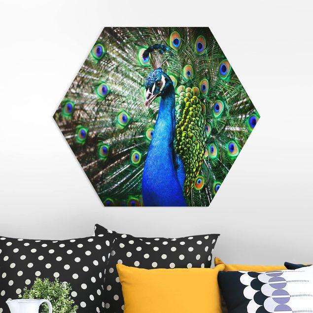 Esagono in forex - Peacock Noble