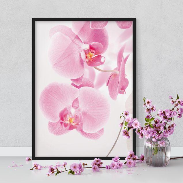 Poster con cornice - Delicate Orchids - Verticale 4:3