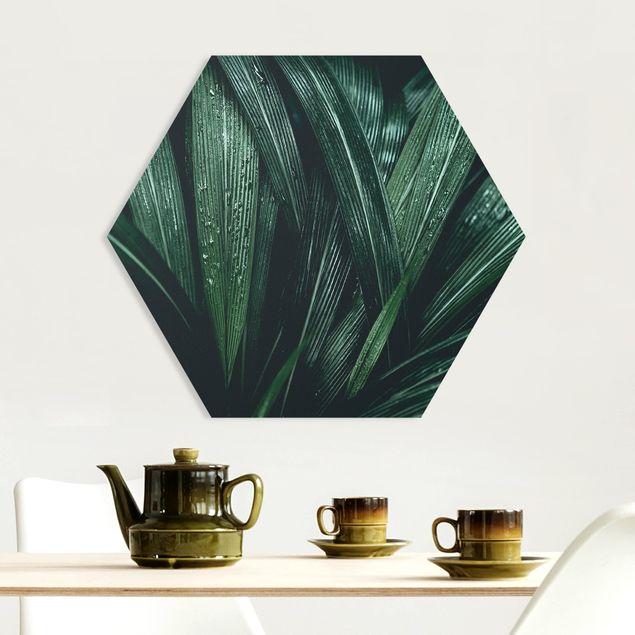 Esagono in forex - Verdi foglie di palma