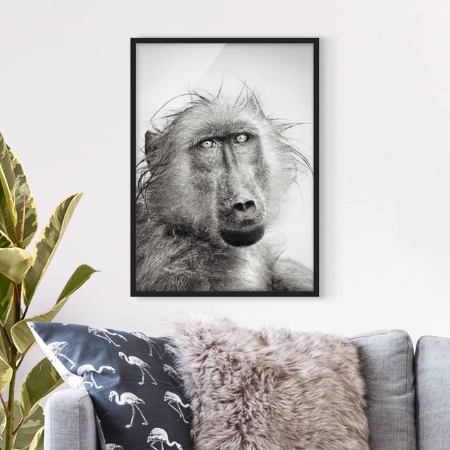 Poster con cornice - Crying Baboon - Verticale 4:3